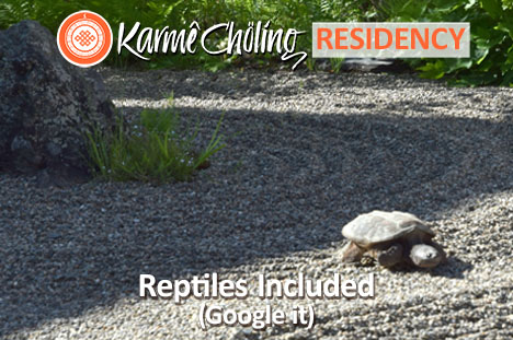Reptiles included
